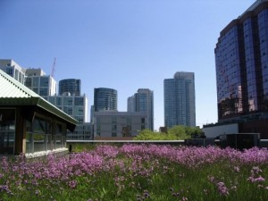 greenroof-skyline